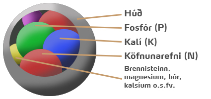 áburðarkorn mynd