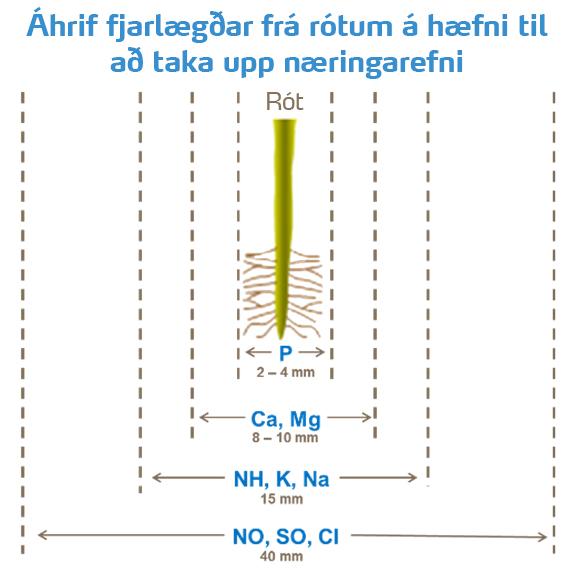 Plöntur taka aðeins upp fosfór sem er í innan við 2-4 mm fjarlægð frá rótunum, 10 sinnum lakari upptaka en á NO3.  Fosfórupptaka krefst þroskaðs rótarkerfis.  Myndin sýnir hversu nálagt ákveðin næringarefni þurfa að vera til að ræturnar geti tekið þau upp.